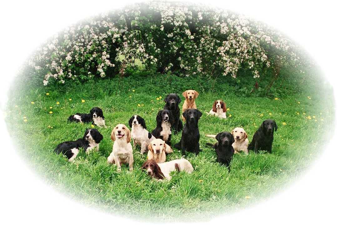 Mountgrace Gundogs